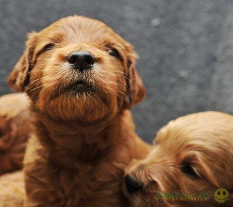 Фотографии новорожденных щенков от Траэр Скотт