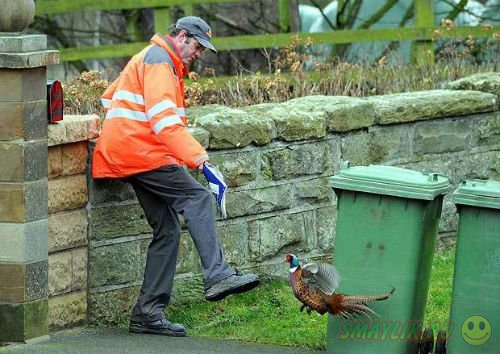 Британскую семью преследует неизвестный фазан