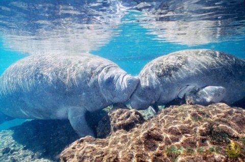 Моменты нежности диких животных