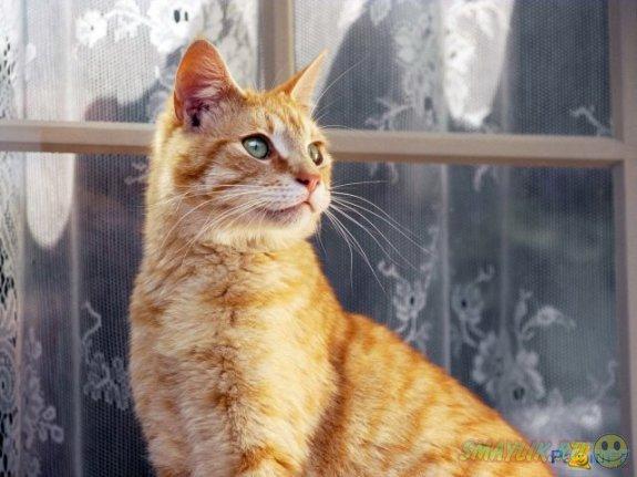 В Румынии вор испугался домашнего кота