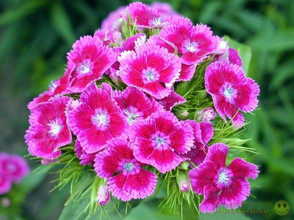 Тяжелая рок-музыка помогает цветам вырасти красивыми и стойкими