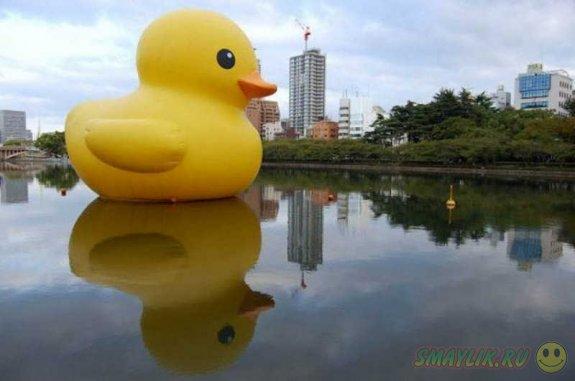 В Гонконге проходит заплыв гигантской надувной утки