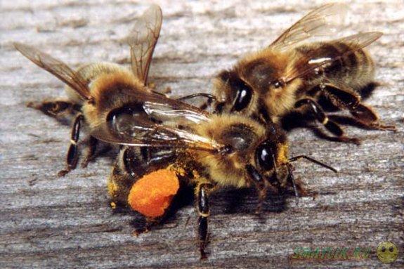 Супружеская пара в штате Юта обнаружила у себя дома гигантскую колонию пчел