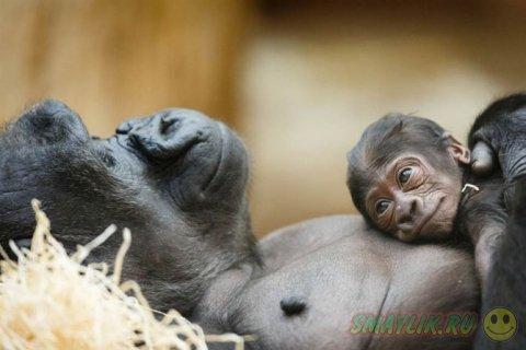 Детёныши животных подрастающие в зоопарках мира