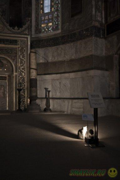 Необычный «верующий» собора Святой Софии