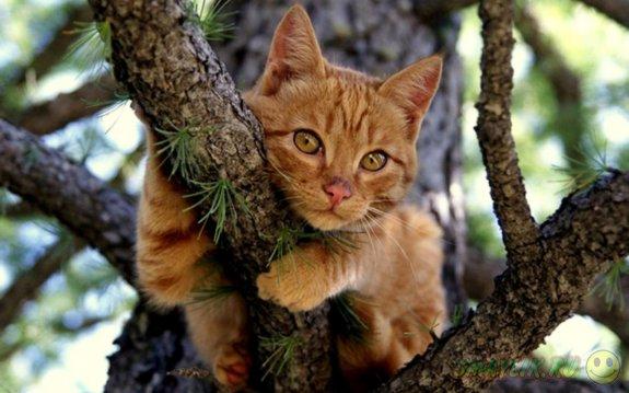 В США сотрудник полиции застрял на дереве, пытаясь помочь коту