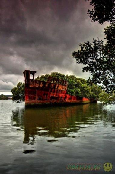 Зеленый лес,  выросший на палубе SS Ayrfield