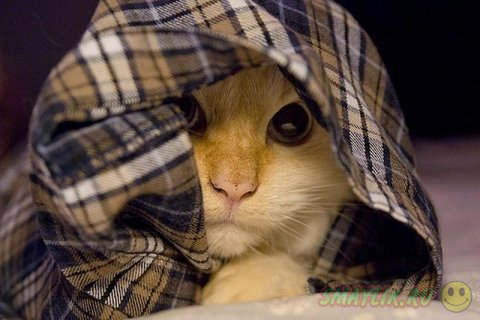 Кошки прячутся