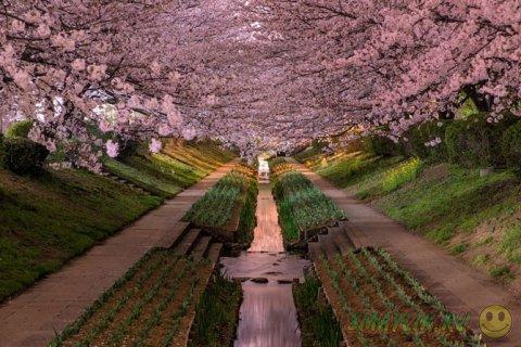 Природа Японии в обьективе фотоапарата