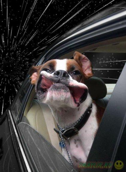 Собаки, высунувшие головы из машин, от  Бенжамина Грелль