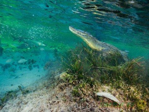 Лучшие фотографии месяца от  National Geographic