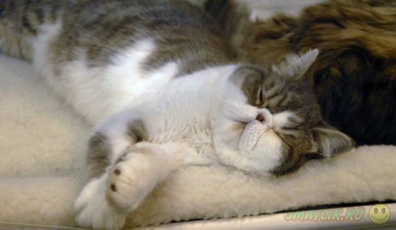 В Англии  ищут специалиста по кошачьему видео