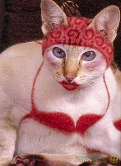 Кэтпейнтинг - разукрашенные коты и кошки