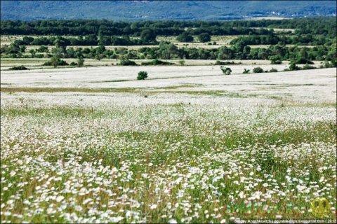 Крымские долины ромашек