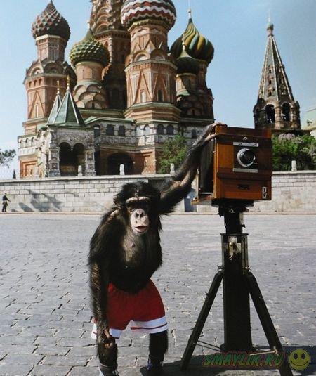 В Лондоне продали фотографии, сделанные шимпанзе Микки на Красной площади