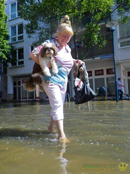Животные во время наводнения в Европе