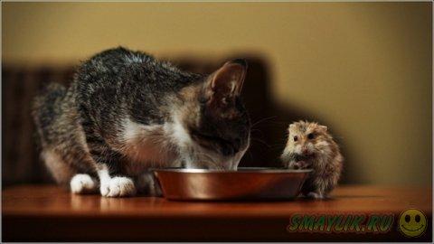 Животные также умеют дружить и любить
