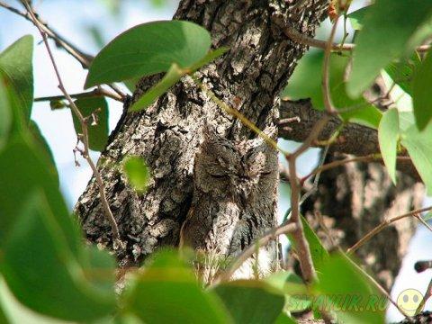 Удивительные птицы совы