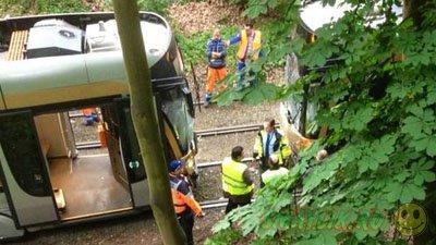 Утки, разгуливавшие по трамвайным путям, спровоцировали аварию