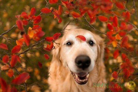 Счастливый и фотогеничный пес Чэмп