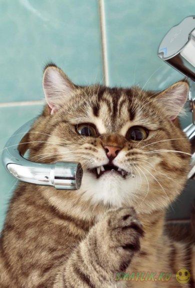 Коты в фотографиях Memberx