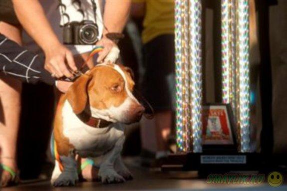 Дворняга Валле - самая уродливая собака в мире