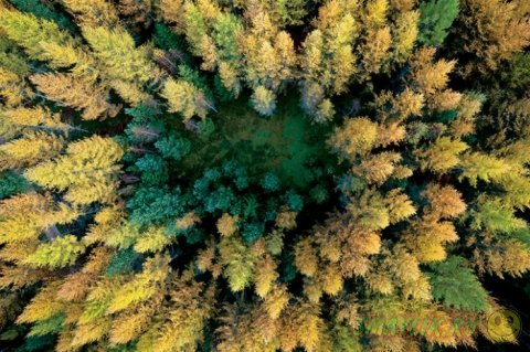 Роскошные леса польской Померании
