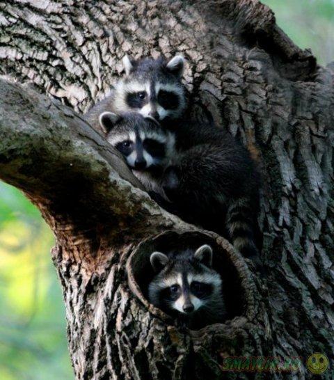 Восхитительные трио в животном мире