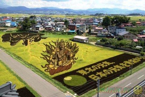 Искусство танбо на рисовых полях в Японии