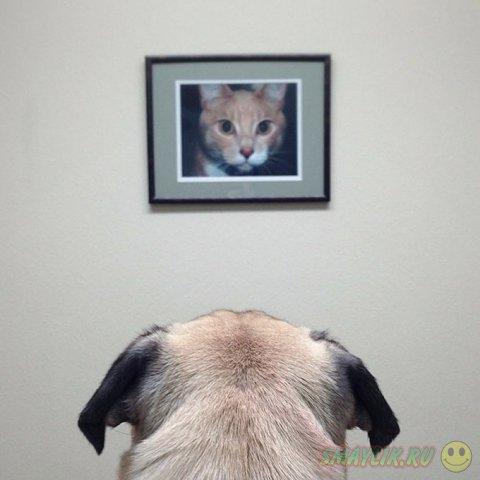 Веселые и креативные фотографии мопса по кличке Норм