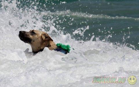 В Уэст-Палм-Бич состоялся чемпионат по серфингу среди собак
