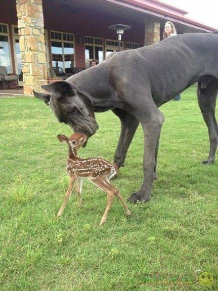 Нам есть чему поучиться у животных