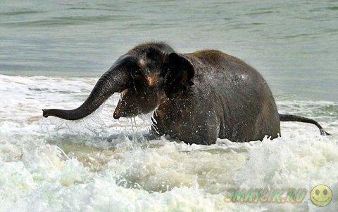 Слонёнок на морском берегу