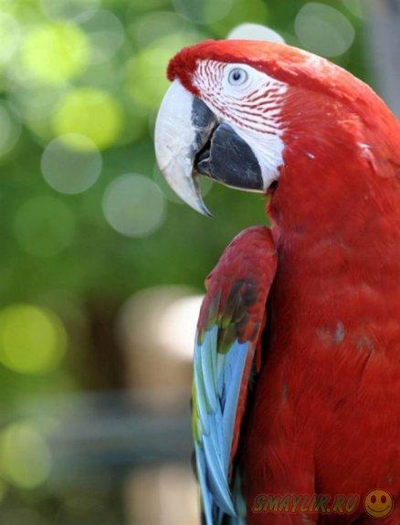 Позитивная подборка фотографий животных