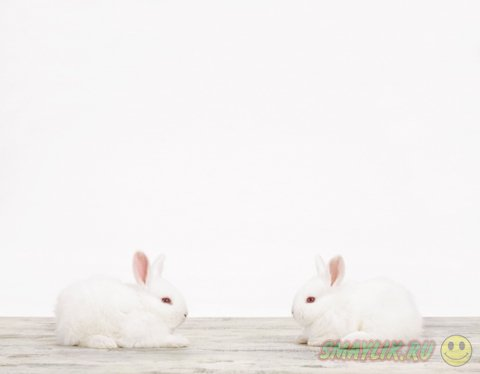Фотографии животных от Шэрон Монтроуз