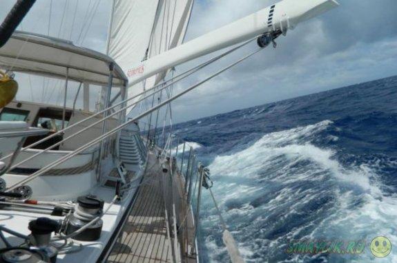 Совершавший морское путешествие кот Бакстон сбежал с яхты хозяев