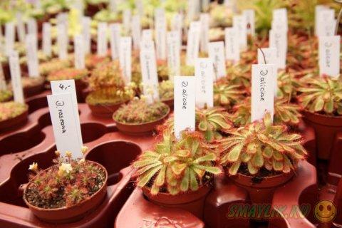 Плотоядные растения в Ботаническом саду Берлина