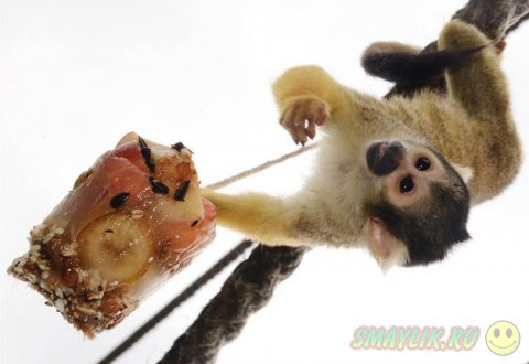Подборка очень красивых фотографий животных