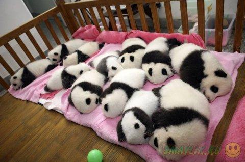 Трогательные фото милых и забавных черно-белых мишек
