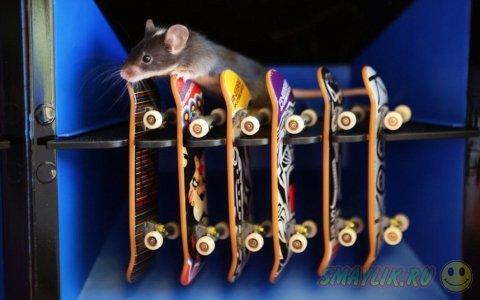 Бесстрашные мышки, катающиеся на скейтборде