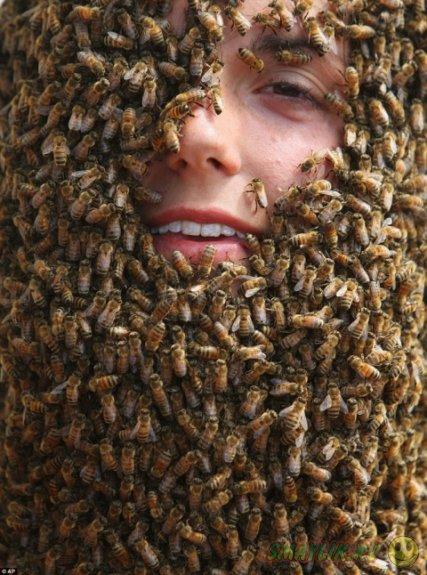 Состязание пчелиных бород на ферме Clovermead Adventure Farm