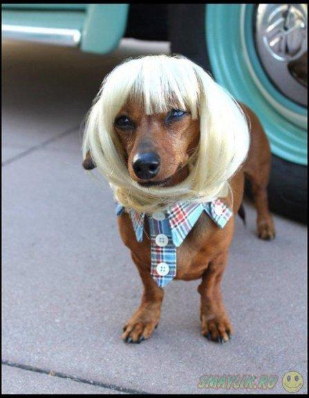 Сумасшедший бренд моды для домашних животных от Леа Уоркмен