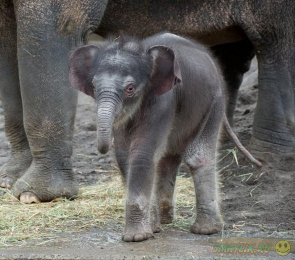 Слониха Матджека выбрала имя для своего детеныша