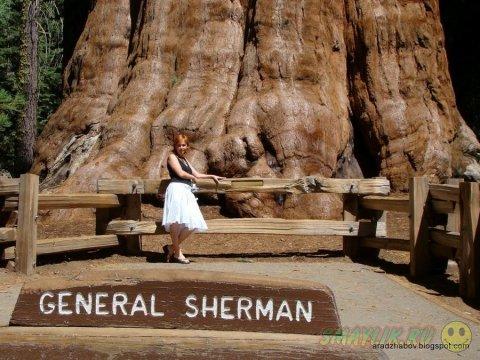 Величественный «генерал Шерман» - настоящее чудо природы