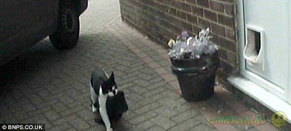 В Британии семейная пара надется отучить  своего кота Норриса от воровства чужих вещей