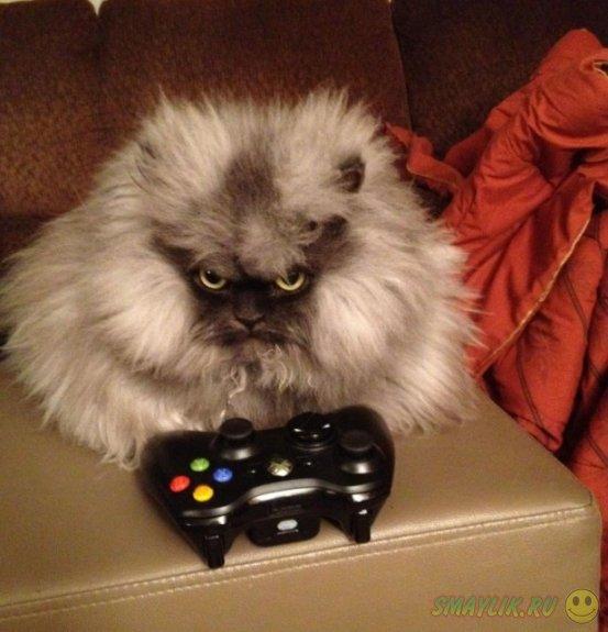 Кот по кличке Полковник Мяу
