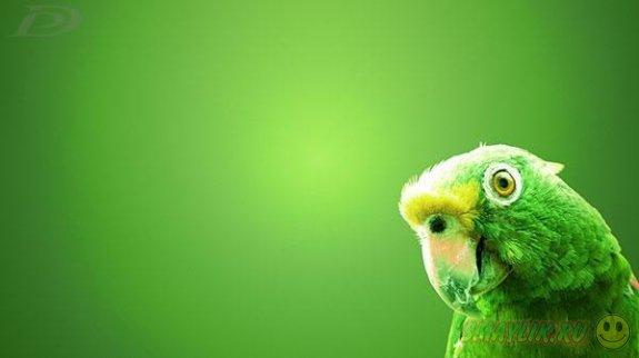 Во Флориде попугай Эмеральд предотвратил ограбление дома