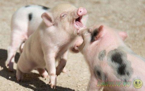 Позитив в фотографиях животных