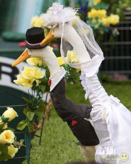Фермер из Австралии шьет одежду для птиц