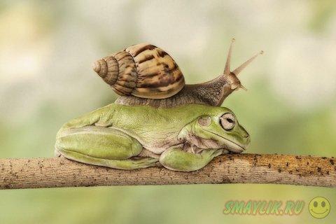 Милые забавные лягушки